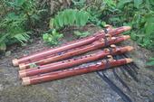 New Cedar Classic Flutes